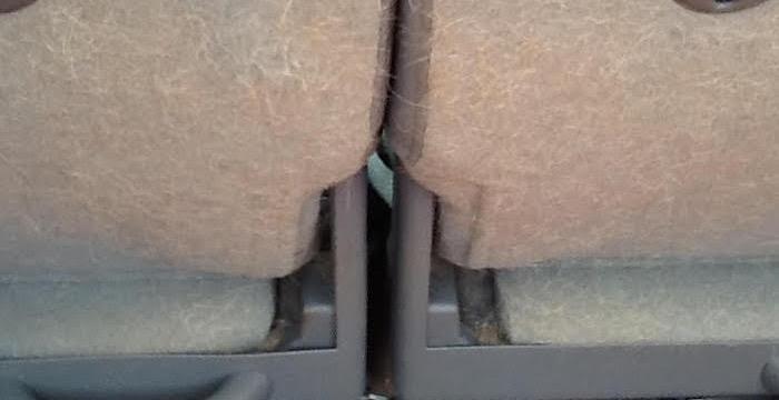 Hondenhaar in kofferbak